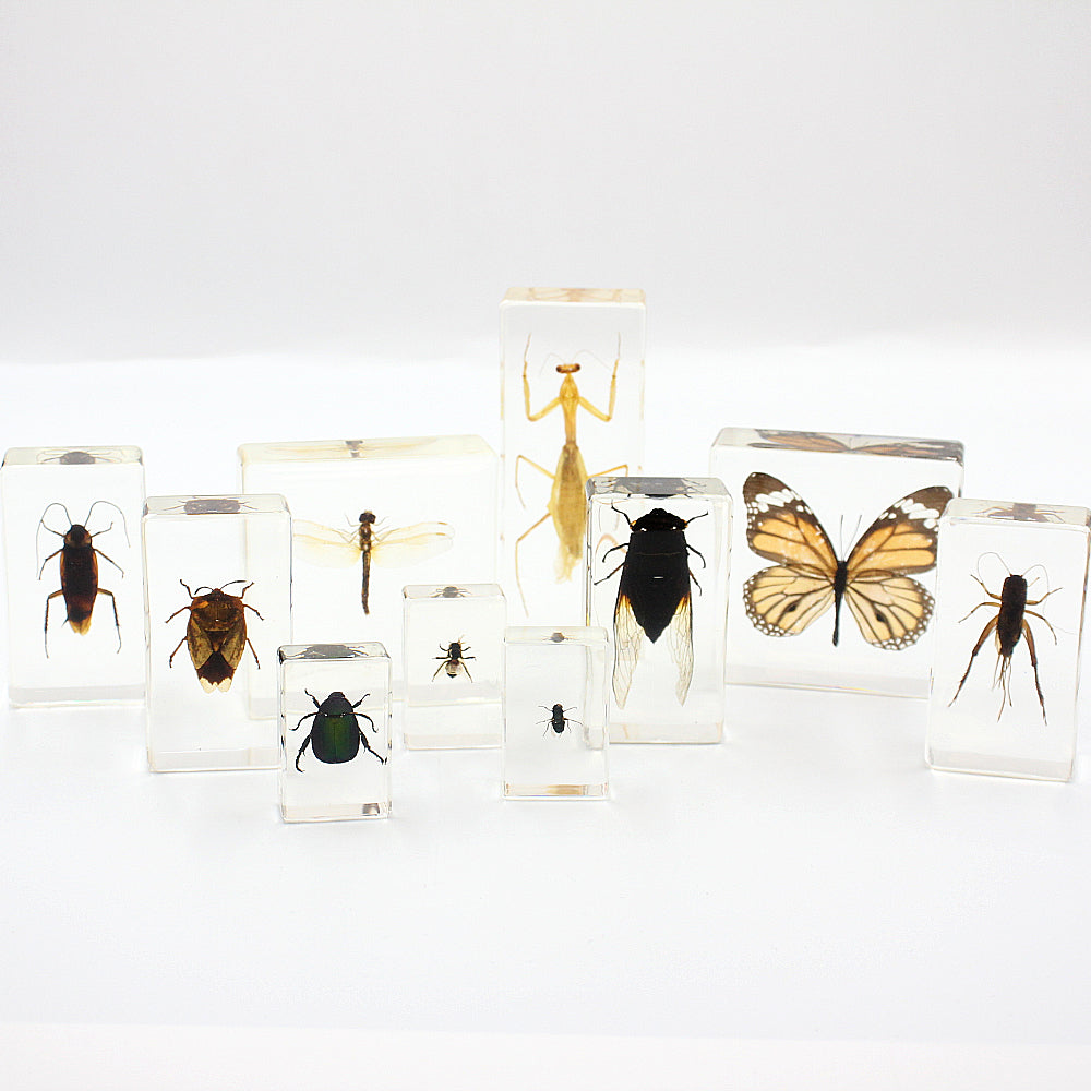 Resin | Insects | Set of 10