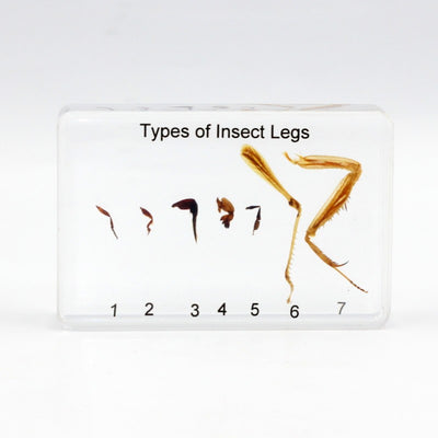 Resin | Comparative Insect Legs