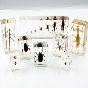 Resin | Insects | Set of 16