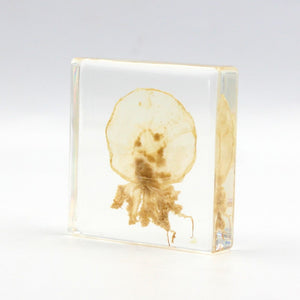 Resin | Jelly Fish