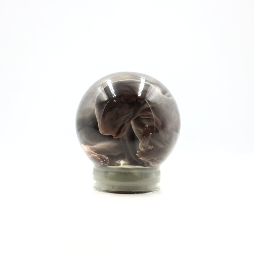 Wet Specimen | Tiny Kitten 3 | Globe