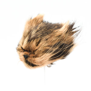 Shrunken Head | Kitten | Medium