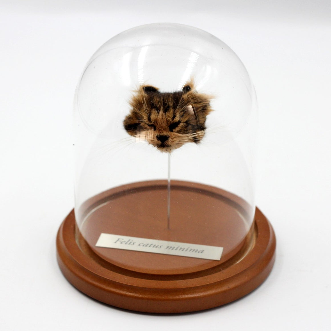 Shrunken Head | Kitten | Small