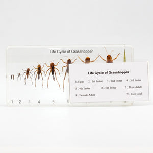 Resin | Life Cycle | Grasshopper