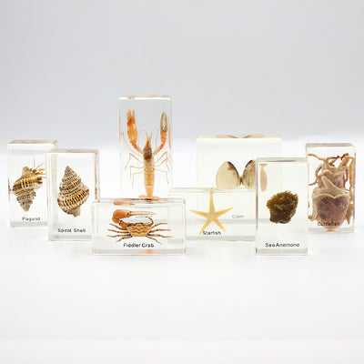 Resin | Marine Animals | Set of 8