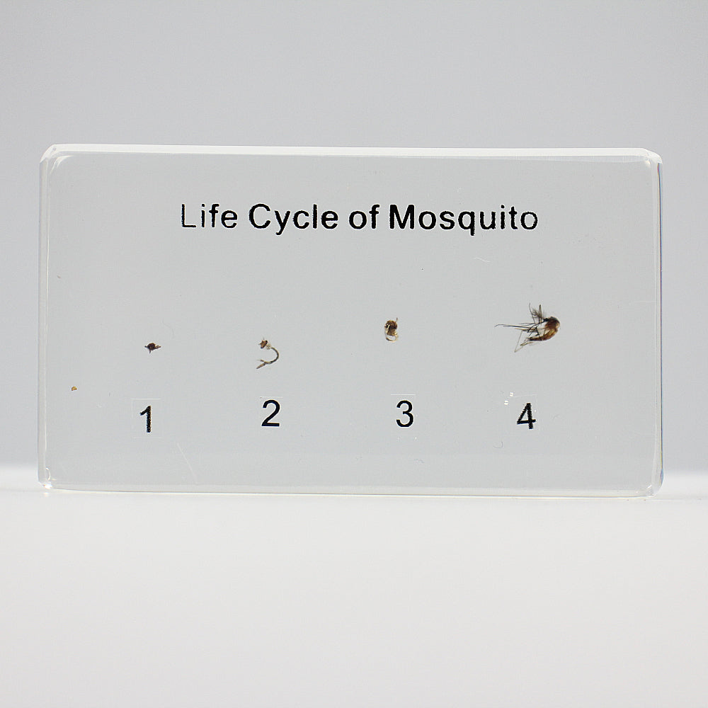 Resin | Life Cycle | Mosquito