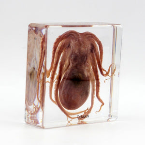 Resin | Octopus | Large