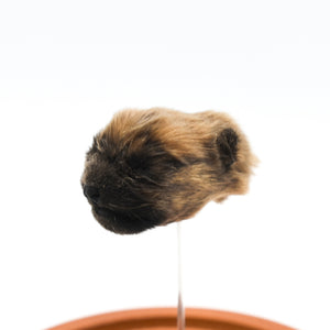 Shrunken Head | Puppy | Bull Mastiff X