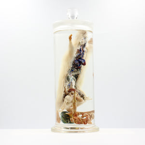 Scientific Specimen | Rat 1 | Vascular System