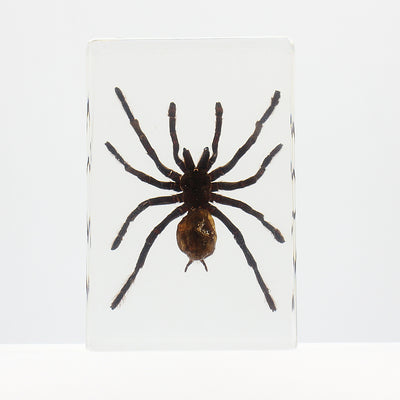 Resin | Spider | Large