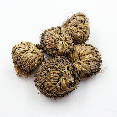 Resurrection Plants | Set of 5