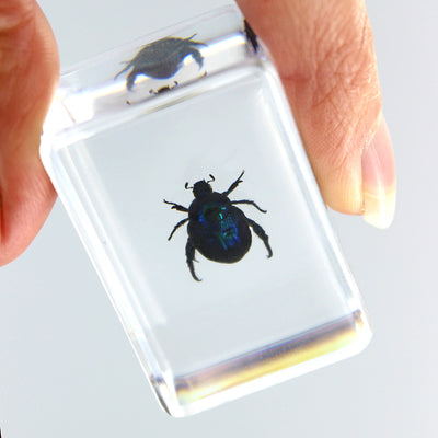 Resin | Green Rose Chafer Beetle | Small