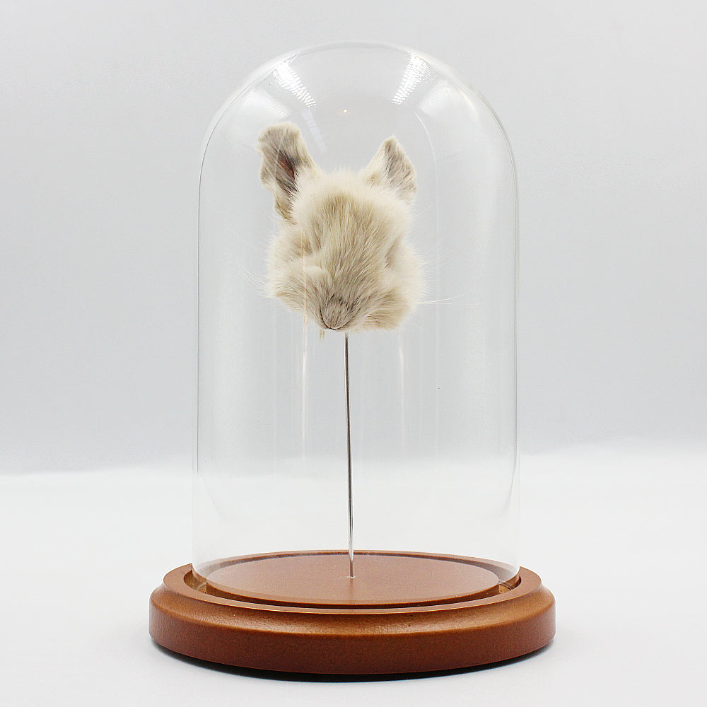 Shrunken Head | Rabbit | Brown Base