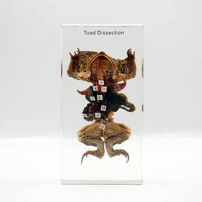 Resin | Toad Dissection