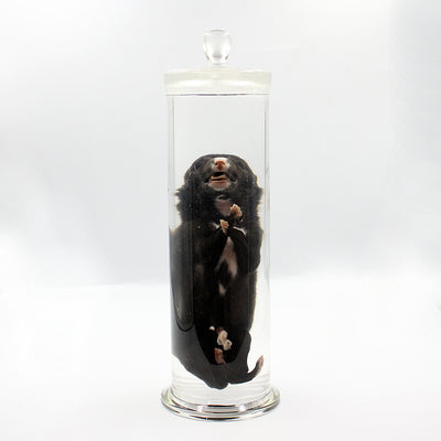 Wet Specimen | Puppy | Trey
