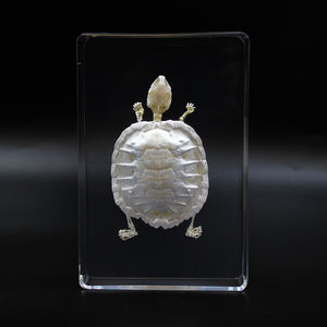 Resin | Turtle | Skeleton | 1