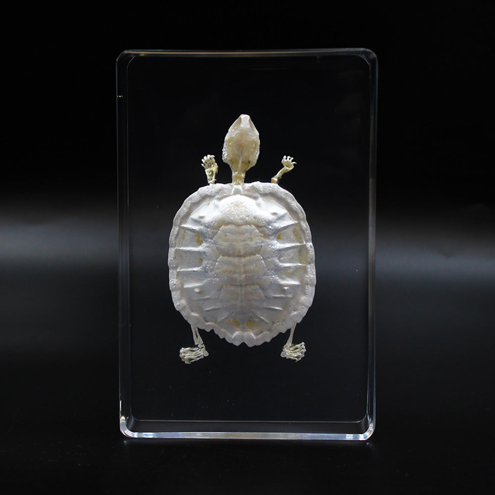 Resin | Turtle | Skeleton