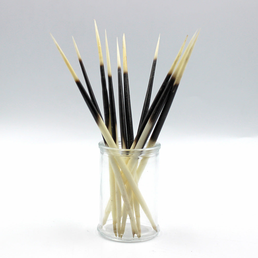 Quills | Porcupine | Set of 10 | Large