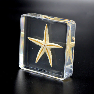 Resin | Starfish