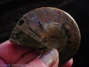 Natural Detailed Carved Rainbow Ammonite Nautilus Skull Fossil Stone - 63.4 Grams