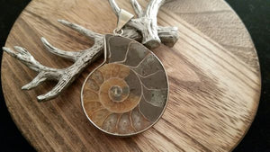 Silver Natural Polished Rainbow Half Ammonite Nautilus Shell Pendant