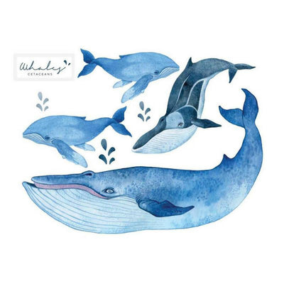 Wondermade - Whale Set Watercolour effect - Individual cut out whales-BabyDonkie
