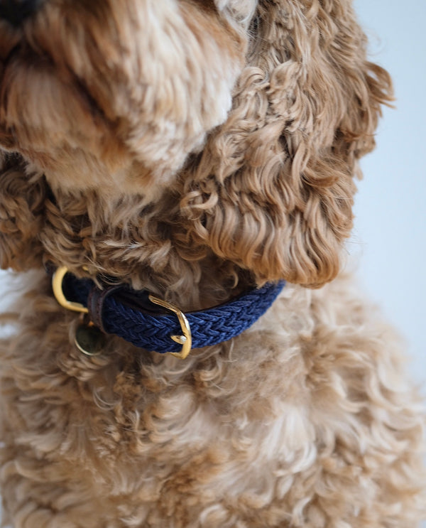 Plaited Nylon Dog Collar Navy
