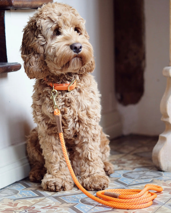 Dog Leash Orange