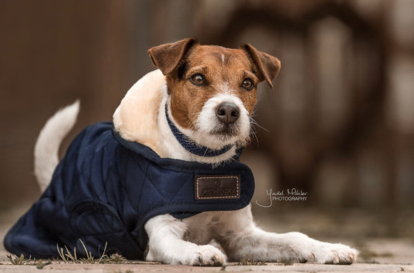Dog Coat Navy