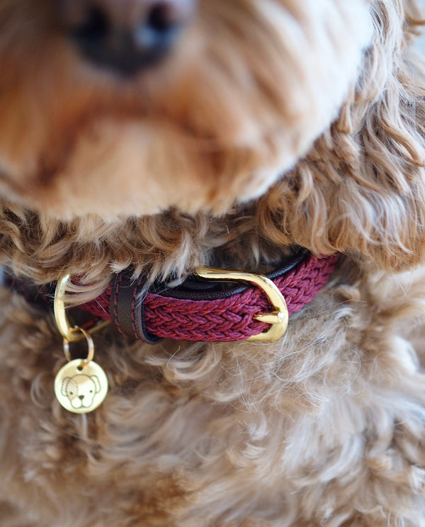 Plaited Nylon Dog Collar Bordeaux