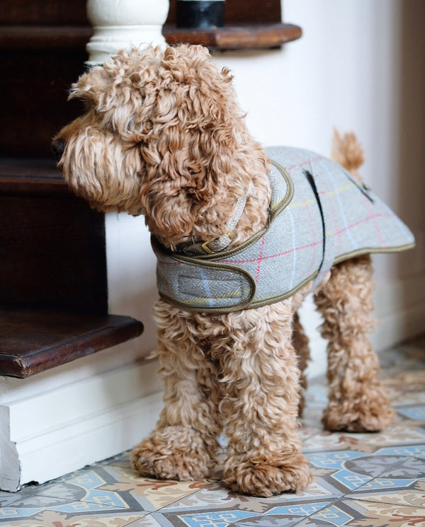 Tweed Dog Coat Sage