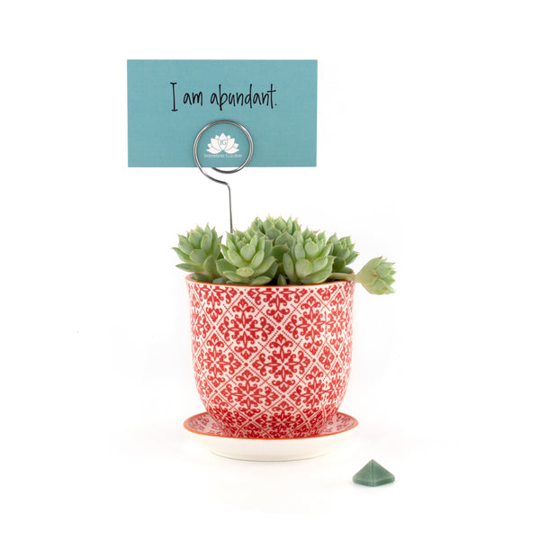 Intention Garden Succulent Gift Kit  - Affirmation  - Abundance - Gift Ideas - Succulent Gift - Succulents - Succulent Planters - Small Indoor Plants - Succulent Care - Mindfulness Gifts - Indoor Garden Kit - Houseplants - Indoor Gardening - Gardening Gifts - Unique Gifts - Gifts for mom  - Gifts for Her - Succulent Gift - Succulent Arrangements | theintentiongarden.com