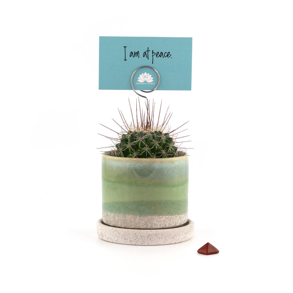 Intention Garden Succulent Gift Kit  - Affirmation  - Inner Peace - Gift Ideas - Succulent Gift - Succulents - Succulent Planters - Small Indoor Plants - Succulent Care - Mindfulness Gifts - Indoor Garden Kit - Houseplants - Indoor Gardening - Gardening Gifts - Unique Gifts - Gifts for mom  - Gifts for Her - Succulent Gift - Succulent Arrangements | theintentiongarden.com