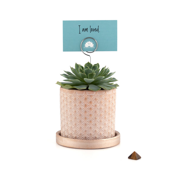 Intention Garden Succulent Gift Kit  - Affirmation  - Self Love - Love - Valentines Gift - Gift Ideas - Succulent Gift - Succulents - Succulent Planters - Small Indoor Plants - Succulent Care - Mindfulness Gifts - Indoor Garden Kit - Houseplants - Indoor Gardening - Gardening Gifts - Unique Gifts - Gifts for mom  - Gifts for Her - Succulent Gift - Succulent Arrangements | theintentiongarden.com