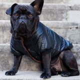 Faux Leather Biker Dog Jacket