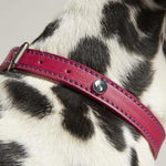 Rosewood & Joules Pink Leather Dog Collars