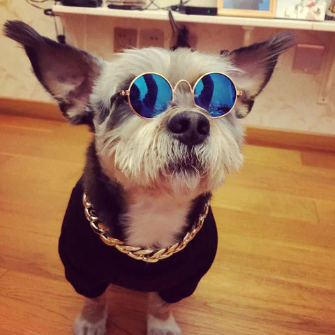 Fashion Puppy Kitty Photo Props Glasses & Necklace