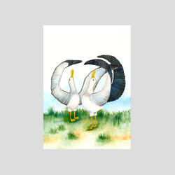 2 dancing Albatross birds art print