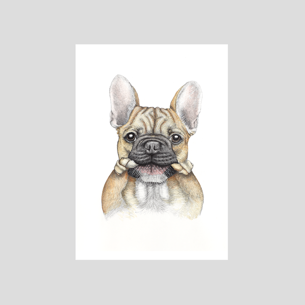 French bulldog / Frenchie print- by Charlotte Nicolin