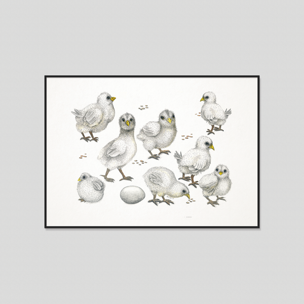 Chicks - Fine art print
