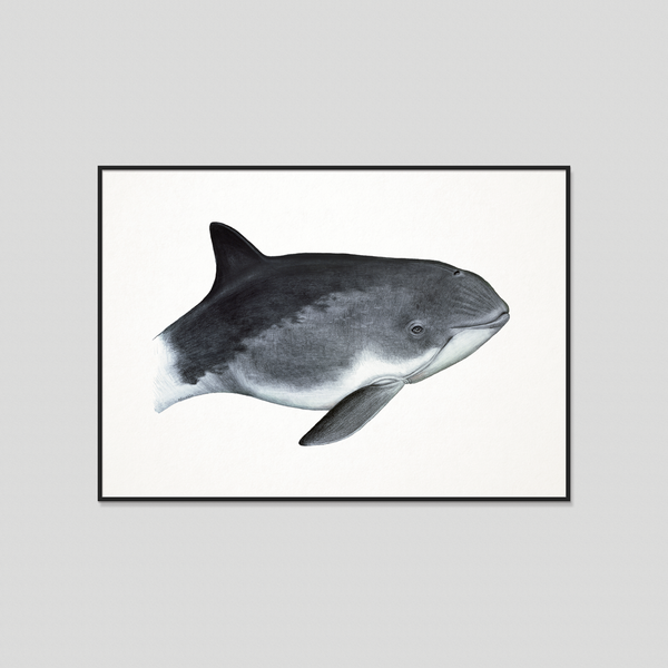 Nordic whale framed art print by Charlotte Nicolin