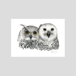 Owl birds art print by Charlotte Nicolin