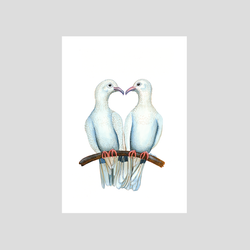 2 doves kissing art print by Charlotte Nicolin