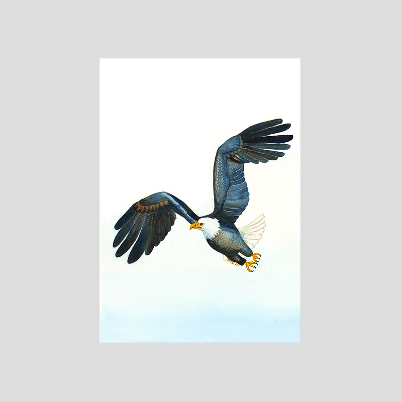 Flying eagle art print by Charlotte Nicolin