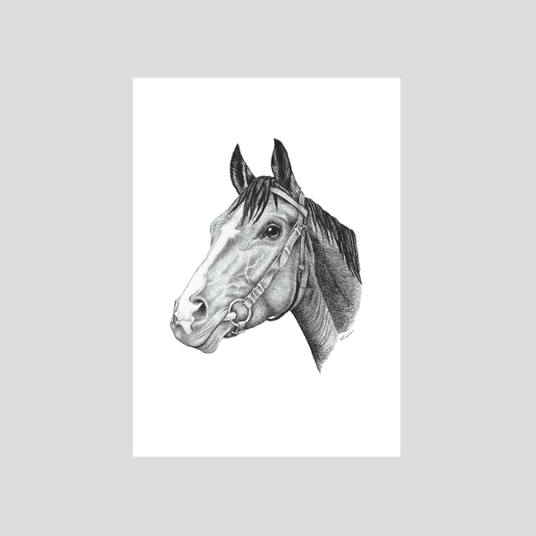 Horse portrait by Charlotte Nicolin