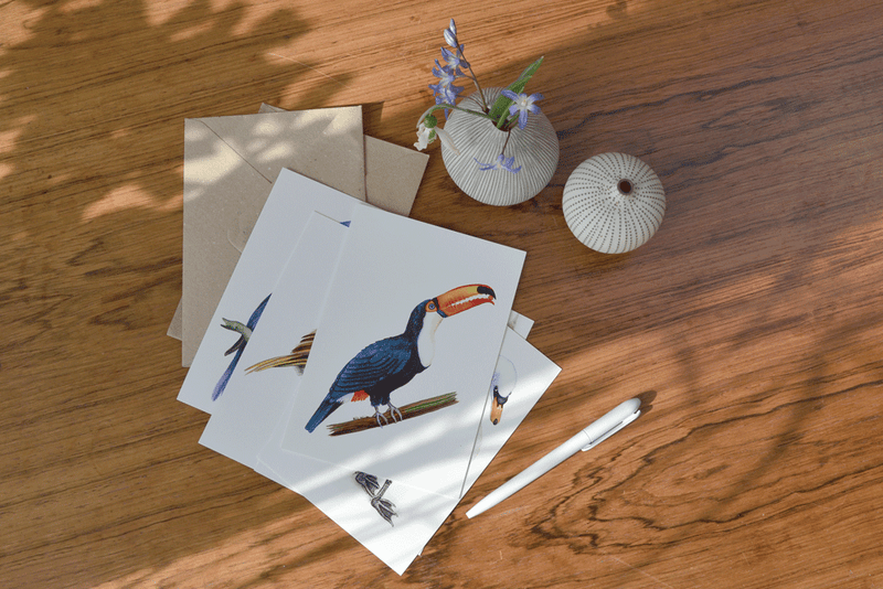 tony the toucan art card