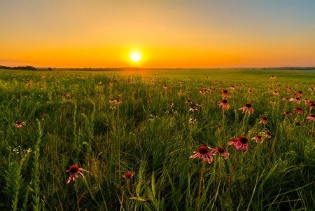 Fight Greenhouse Gasses with Prairies