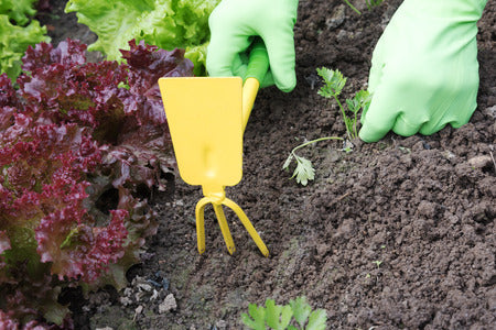 Weeding Out: 5 Tips to Maintain Your Veggie Garden (And Your Sanity!)