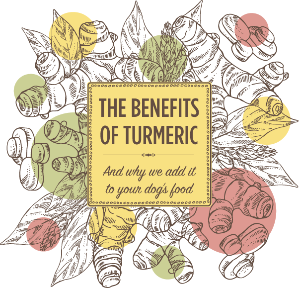Turmeric: Is it good for you and your dog?