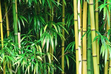 Bamboo For Skin Care?